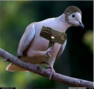 Radar pigeon